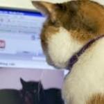 cat video 2